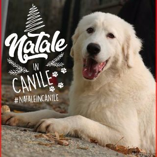 Natale in canile